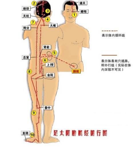 足太阳膀胱经.jpg