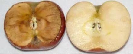 烂苹果.png
