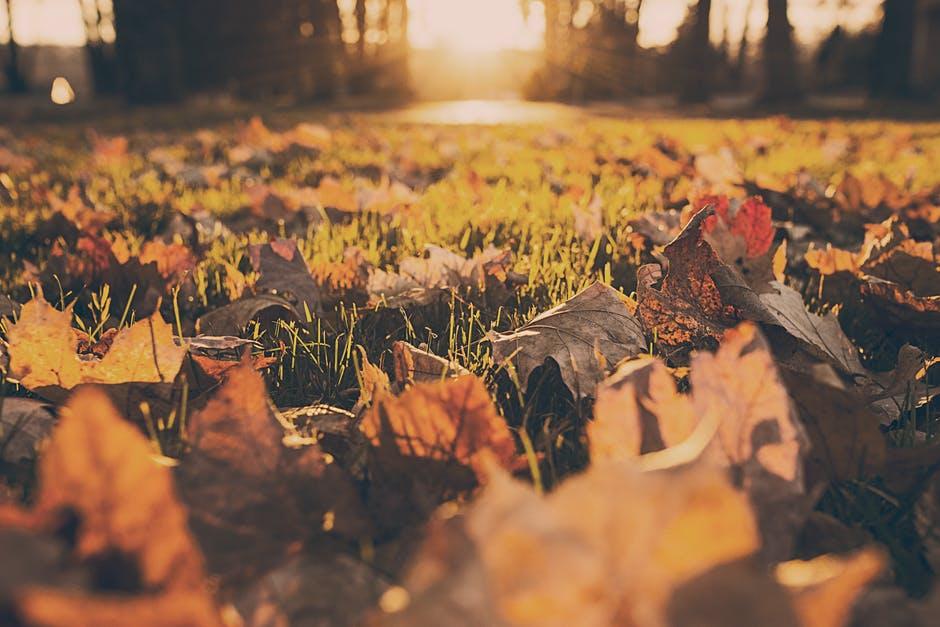 秋天.jpg