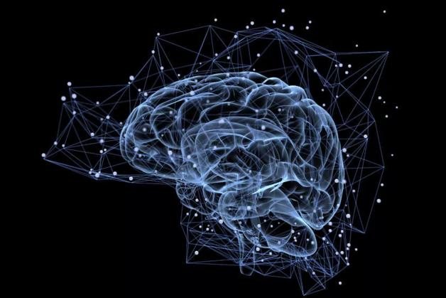 大脑.png